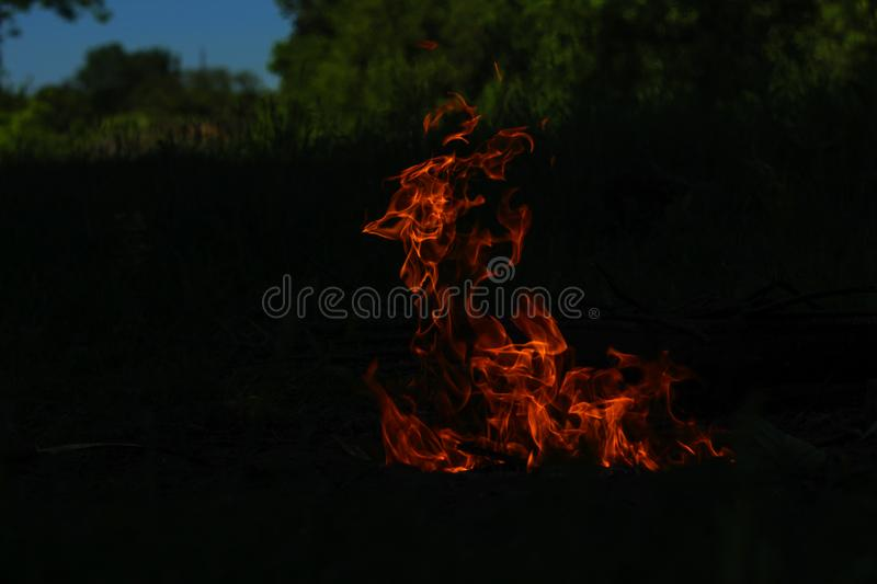 fire at night for barbecue in the woods royalty free stock image