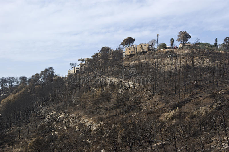 Fire remains in Carmel mountains royalty free stock image