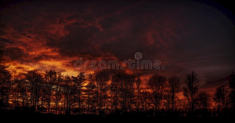 Fire Sky Burning over a Forrest stock image