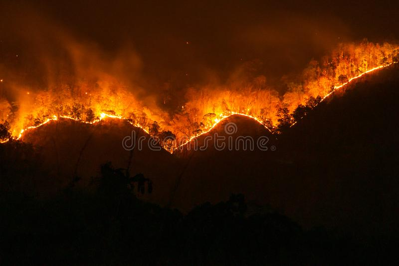 fire. wildfire, burning pine forest in the smoke and flames stock photo
