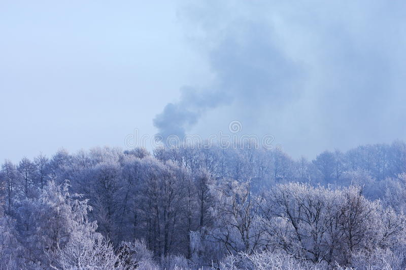 Download Fire in winter woods stock image. Image of frost, frosted - 12969743