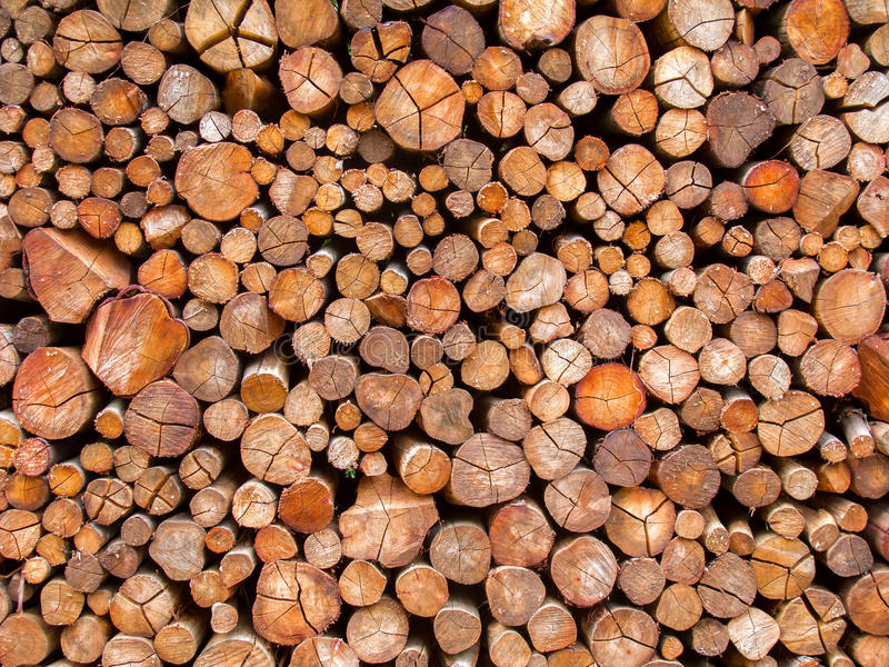 Fire wood trunk texture. Fire wood texture - trunk pattern stock images