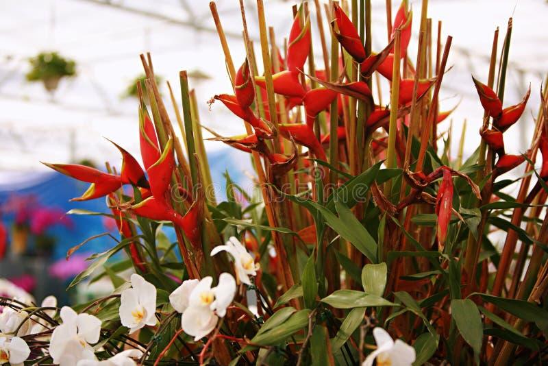Firebirdbanaan royalty-vrije stock fotografie
