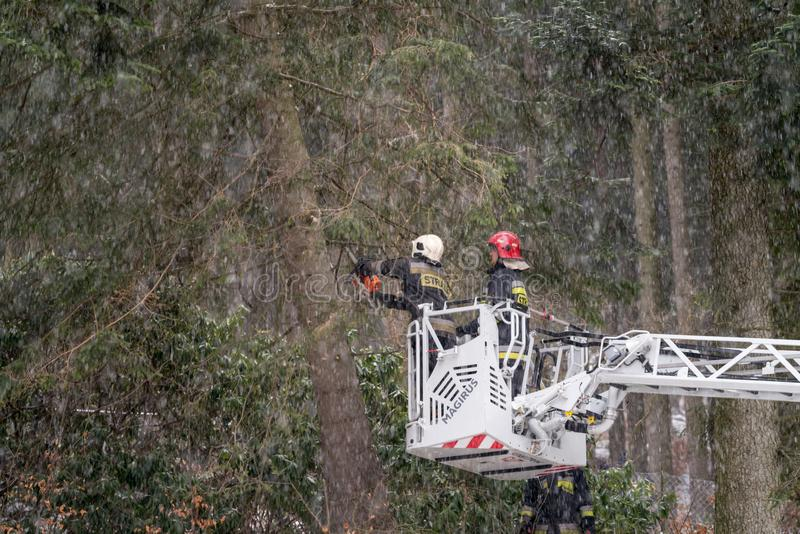 Firefighters cutting branches of a tree royalty free stock images