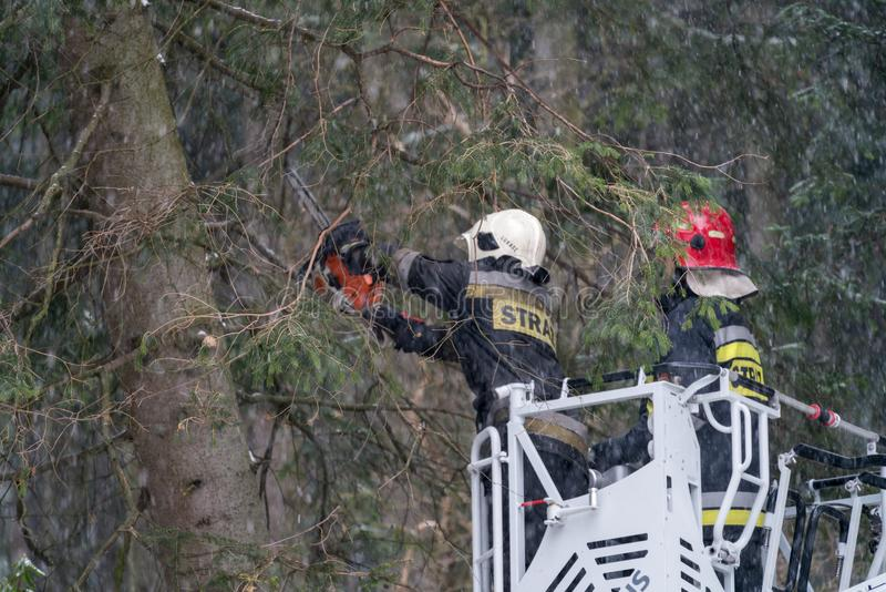 Firefighters cutting branches of a tree stock photography