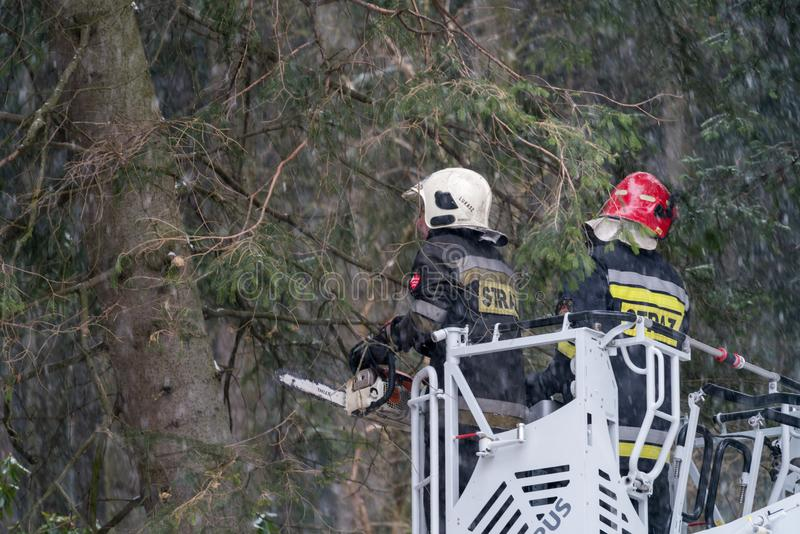 Firefighters cutting branches of a tree royalty free stock photography