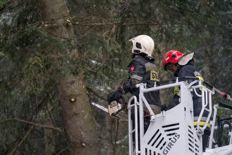 Firefighters cutting branches of a tree royalty free stock photo