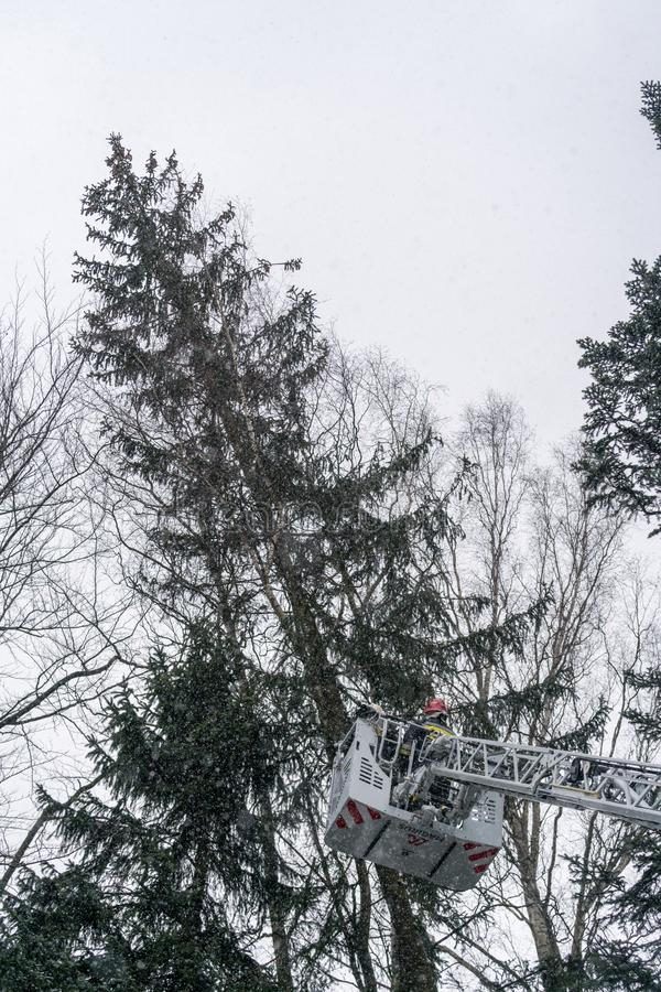 Firefighters cutting branches of a tree stock photo