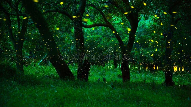 Fireflies στο θάμνο τη νύχτα στην επαρχία Prachinburi, Ταϊλάνδη στοκ φωτογραφίες