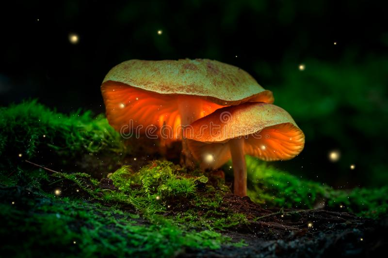 Fireflies and glowing mushrooms in a dark forest at dusk stock images