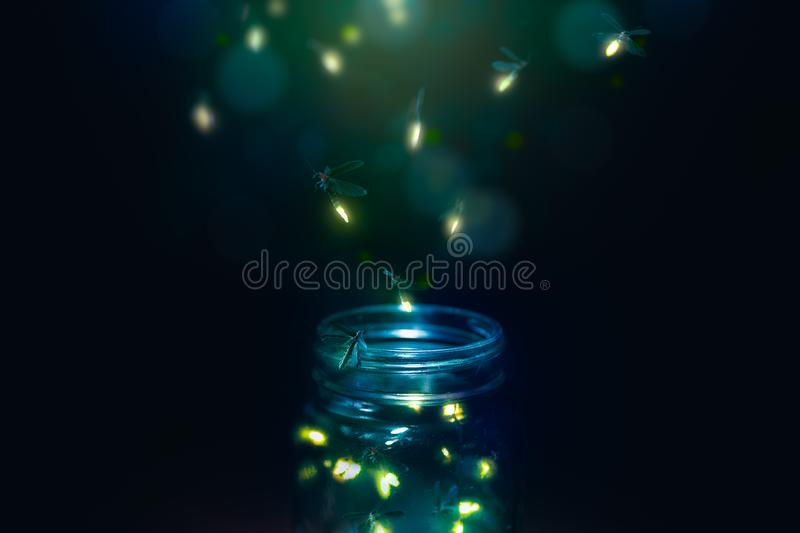 Fireflies in a jar on a dark background stock photography