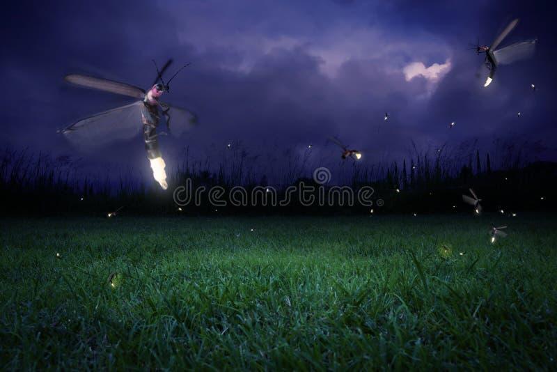Fireflies at night. Real fireflies at a calm night