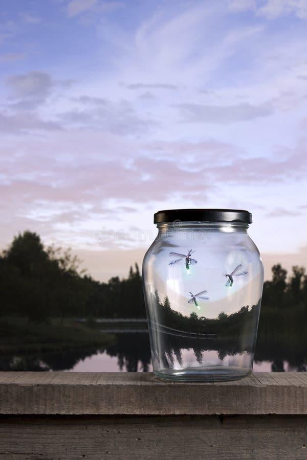 Fireflies no por do sol imagens de stock