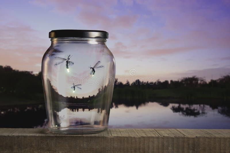firefliessolnedgång royaltyfria bilder