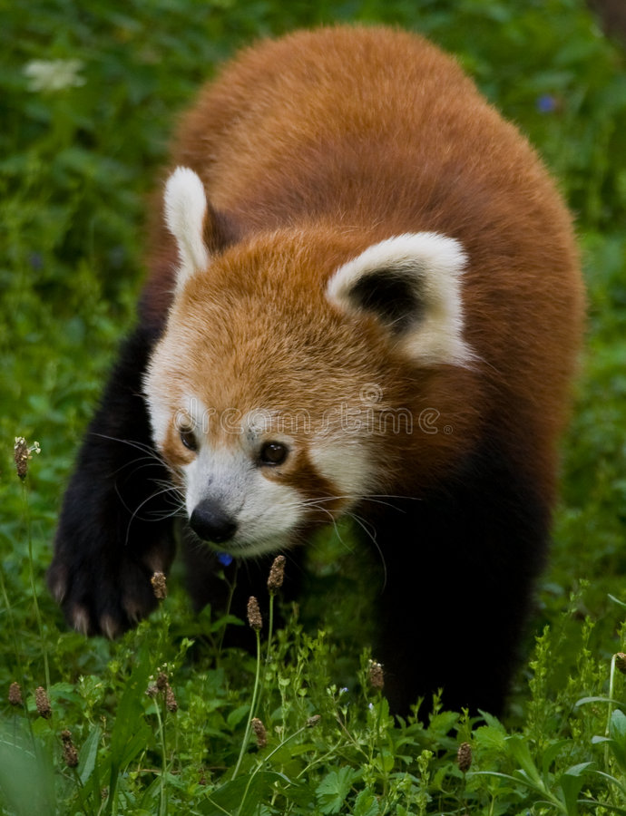 Firefox imagen de archivo