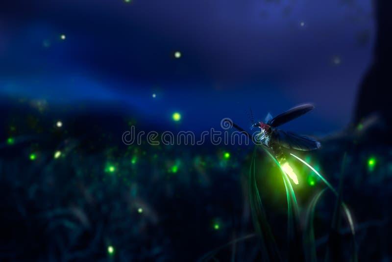 Firegly em um campo de grama na noite fotos de stock royalty free