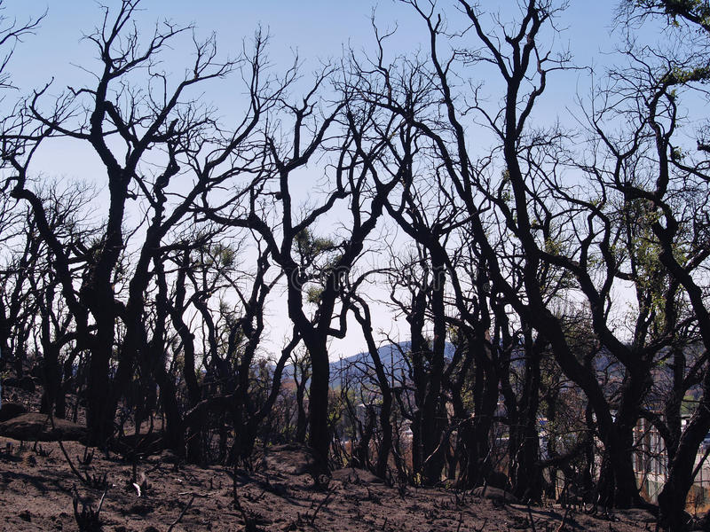 Fires in Catalonia: Natural Disaster royalty free stock images