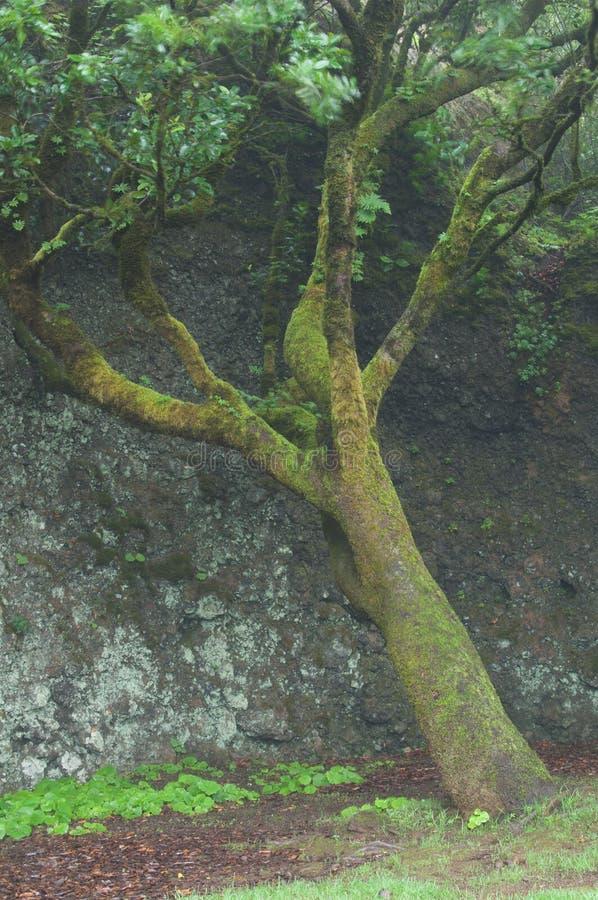 Firetree стоковая фотография rf