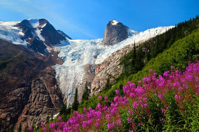 Fireweed in the Bugaboos, Britsh Columbia, Canada royalty free stock photography