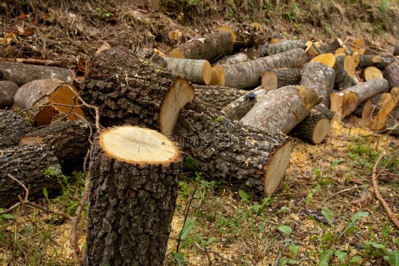 Firewood stock image