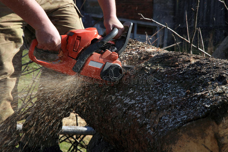 Download Firewood cut stock image. Image of professional, firewood - 24845307