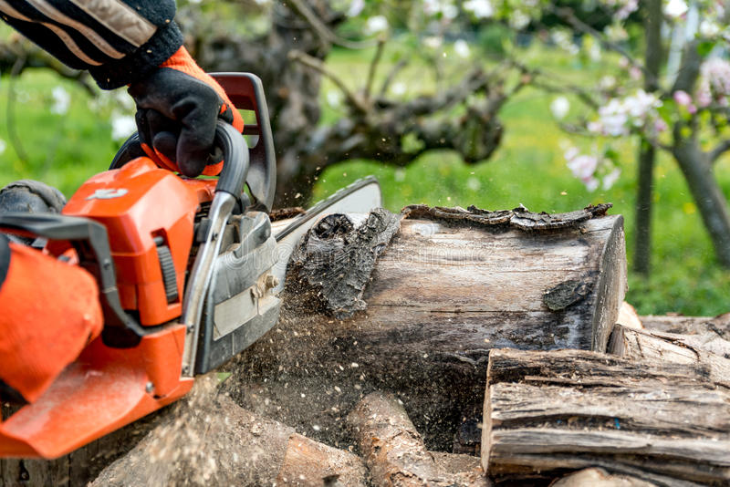 Firewood saws with a chainsaw. Wood saws with a chainsaw stock photos