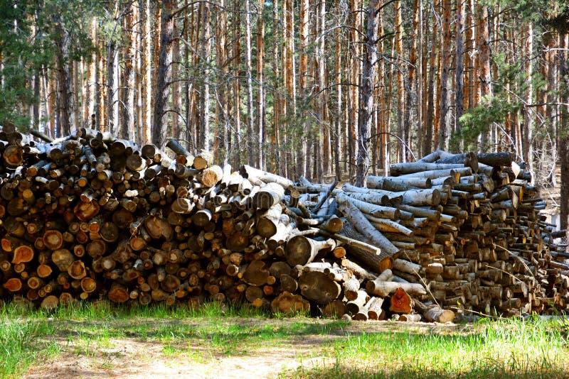 firewood Stockez le bois de chauffage images stock