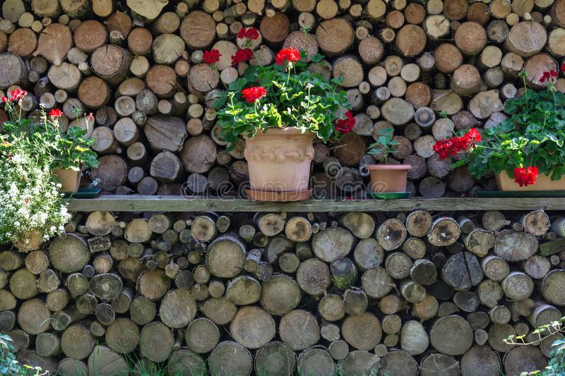 Firewood storage is decorated with flower pots with geranium flowers close up royalty free stock image