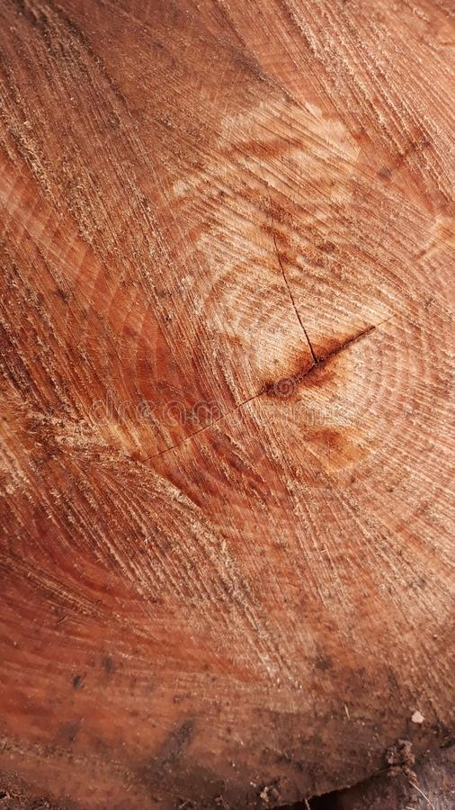 Firewood texture stock photography