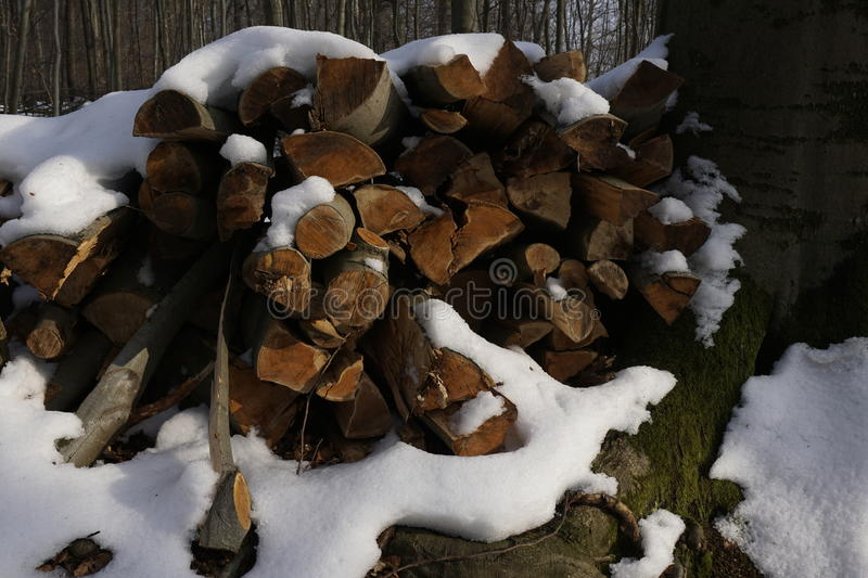 Firewood in winterly forest. Snow covered firewood in a winterly forest royalty free stock photo