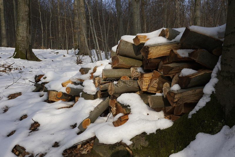 Firewood in winterly forest. Snow covered firewood in a winterly forest stock photo