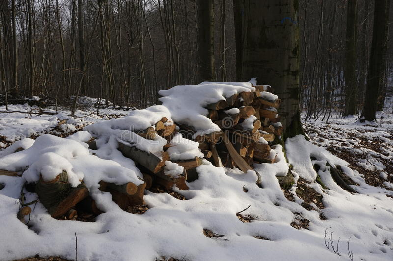 Firewood in winterly forest. Snow covered firewood in a winterly forest royalty free stock image