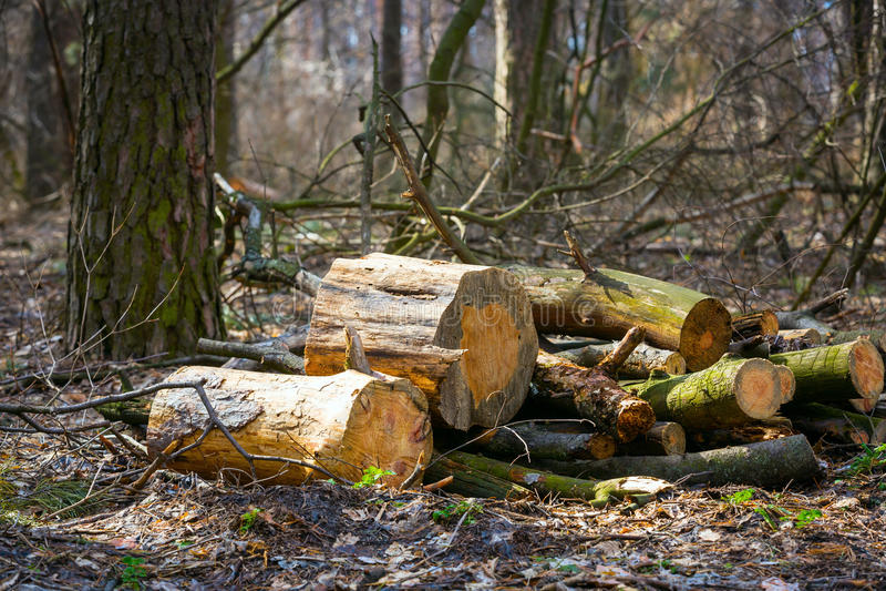 Firewoods στοκ εικόνα