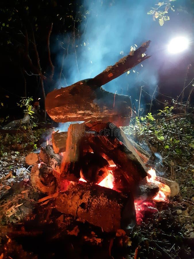 Firewoods het branden in bos stock afbeelding