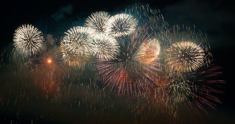Firework royalty free stock image