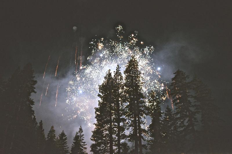 Fireworks Over Tree Tops Free Public Domain Cc0 Image