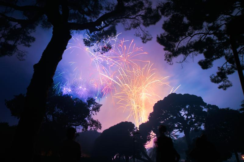 Fireworks with tree silhouettes around royalty free stock image