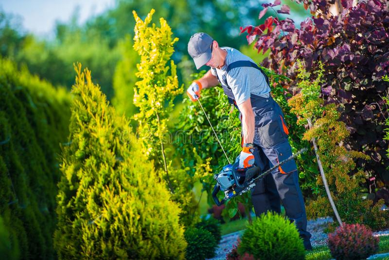 Firing Up Hedge Trimmer. Firing Up Gasoline Hedge Trimmer by Professional Gardener. Garden Works. Trimming Hedge stock photo