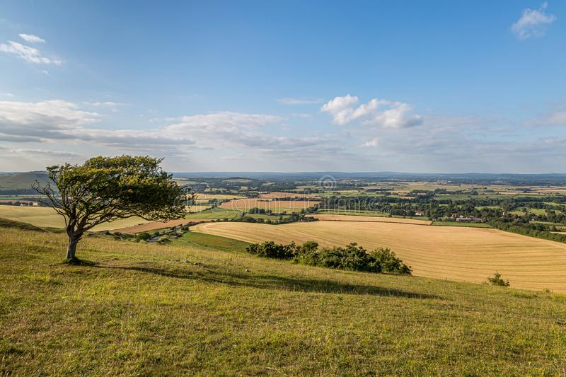 Firle Beacon View. The view out over the South Downs from Firle Beacon, on a sunny summers evening royalty free stock photo