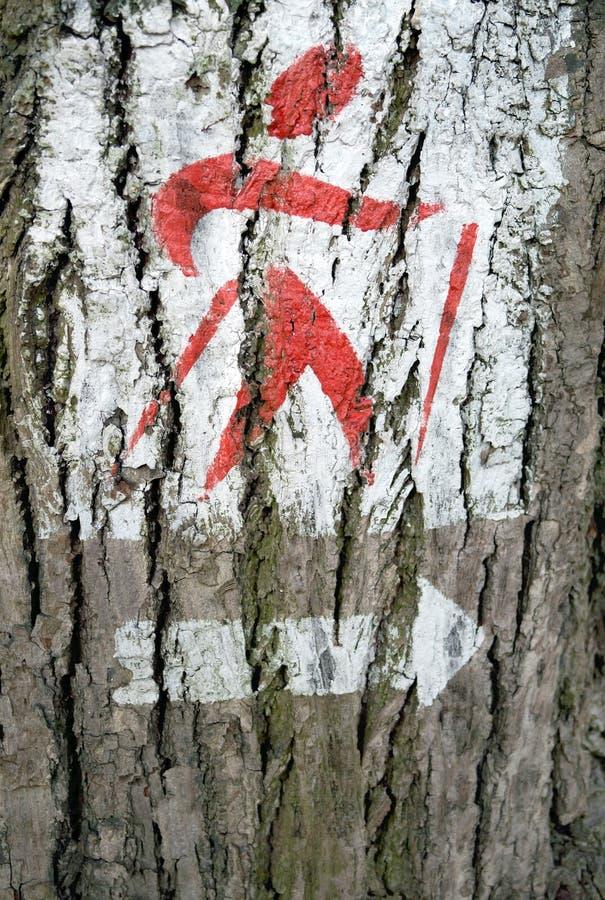 Firma di camminata nordica sull'albero immagine stock libera da diritti