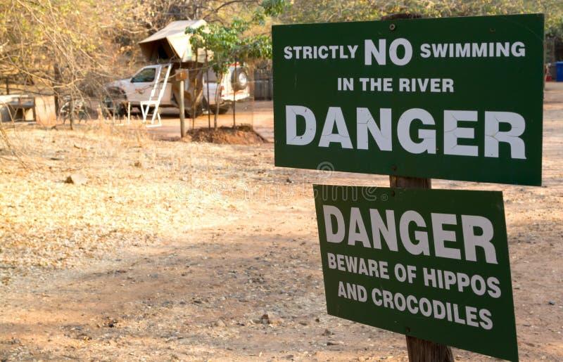 Firme el verraco indicado a las huéspedes la presencia de hipopótamos foto de archivo