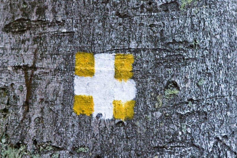 Download Firmi dentro una foresta immagine stock. Immagine di albero - 7304709