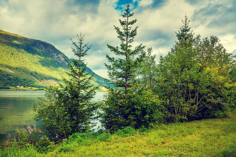 Download Firs on the lake shore stock photo. Image of lake, magic - 98763200
