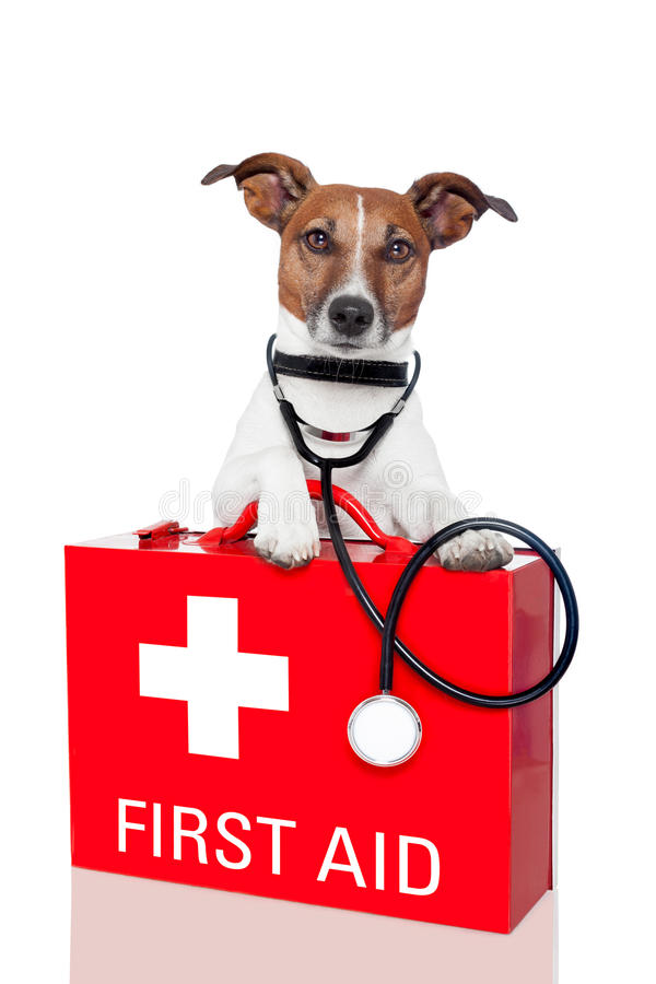 First aid dog royalty free stock photos