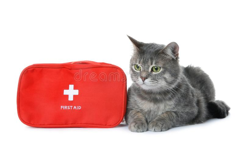 First aid kit and cute cat on white background royalty free stock photos