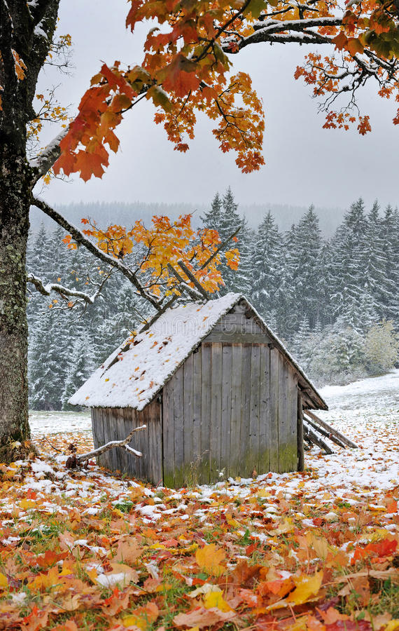 First autumn sudden snow royalty free stock image