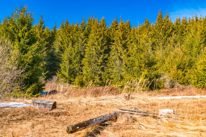 First day of spring rock texture and green pine trees royalty free stock images