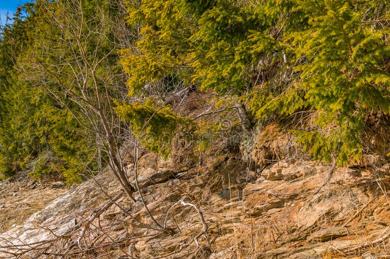 First day of spring rock texture and green pine trees royalty free stock photos
