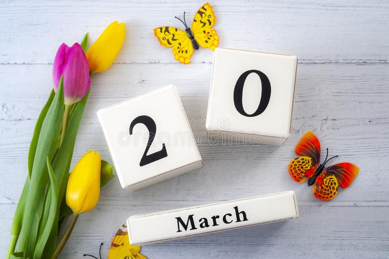 First day of Spring and springtime equinox concept theme with block calendar set on March 20, two yellow tulips and one pink tulip royalty free stock photos