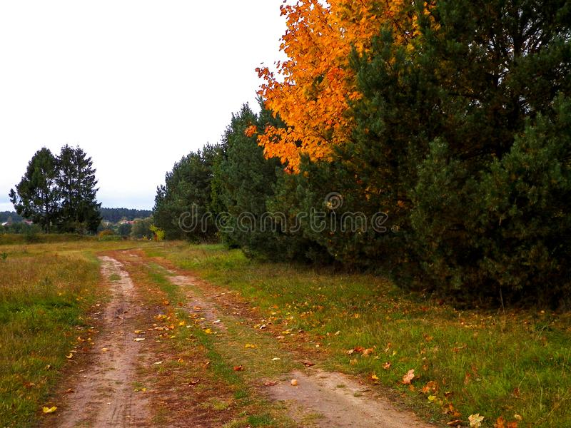 First days of autumn - orange color tree. Kashubian Region, Poland. Nature concept stock photography